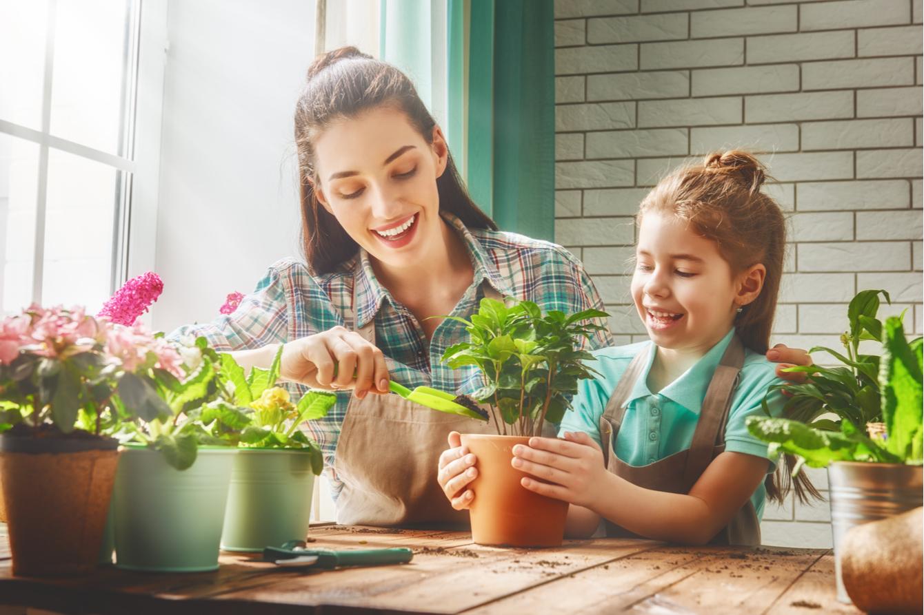 beko ingrijeste plantele de apartament