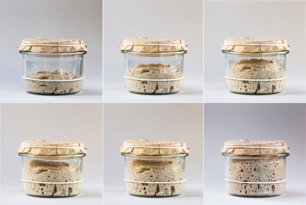 cum-fermenteaza-maiaua-naturala-pentru-painea-de-casa